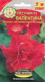 petunia_f1_valentina