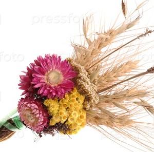Сухоцвіти / Сухоцветы